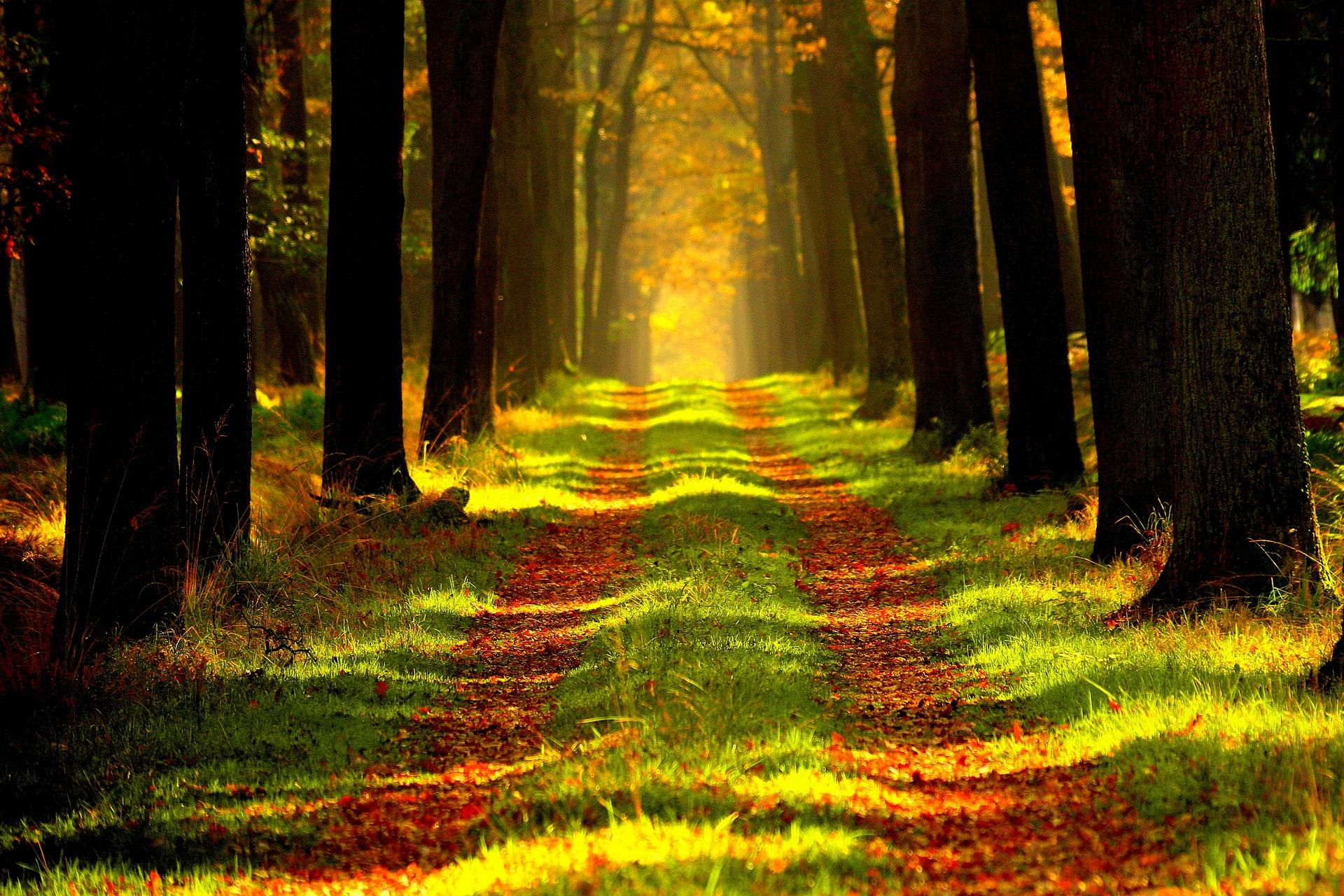 Kapitalanlage Wald: Sicher kein Holzweg!